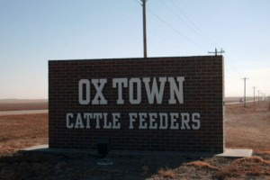 Ox Town Cattle Feeders
