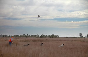 Kansas Pheasant Hunting, Greeley County Kansas